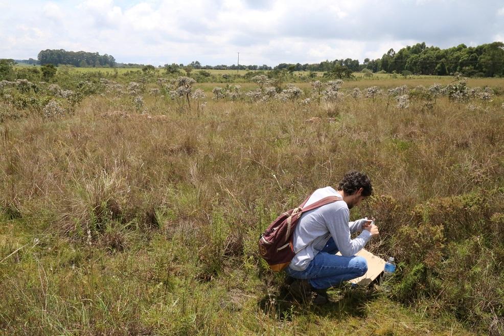 Aluno de mestrado do Programa de Pós-Graduação em Biologia Vegetal da UFU, Rodrigo Valentim, também faz parte do estudo | Foto: Divulgação